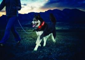 NiteDawg LED Hundehalsband in rot, Größe M